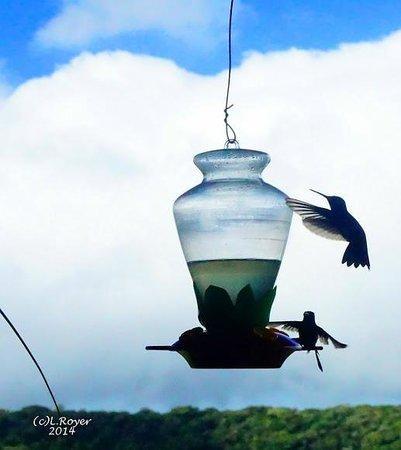 Hotel Montana Monteverde : Hummingbirds