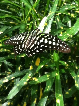 Key West Butterfly and Nature Conservatory: Butterflies everywhere!!