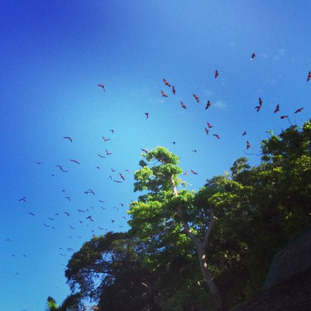 Club Paradise Palawan: The fruit bats