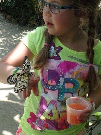 The Butterfly Farm (La Ferme des Papillons): Two beauties