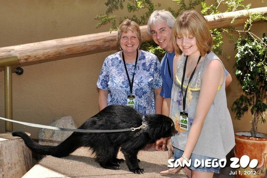 San Diego Zoo : Posing with a bearcat
