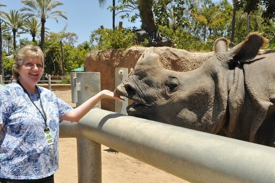 San Diego Zoo : i got to feed and touch a rhino!