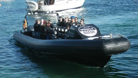 Manly Ocean Adventures: 90 kph Assault Boat - thrilling ride