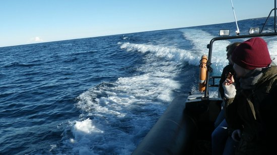 Manly Ocean Adventures: a pod of 40 dolphins were playing in our wake