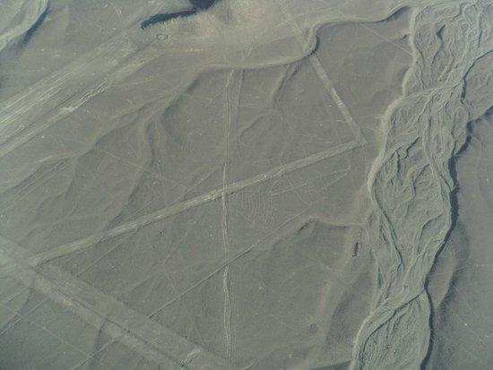 Lineas de Nazca: Linhas