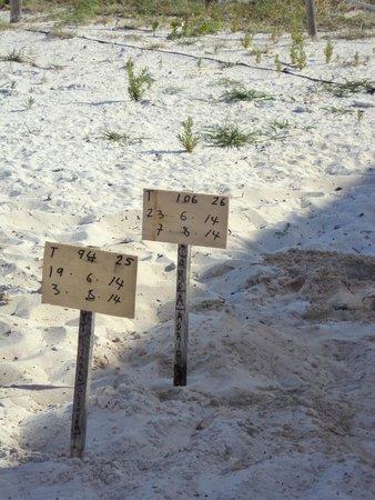 Sol Cayo Largo: Playa (área de tortugas)