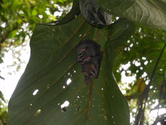 Arenas del Mar Beachfront & Rainforest Resort : tent bats at rainmaker....