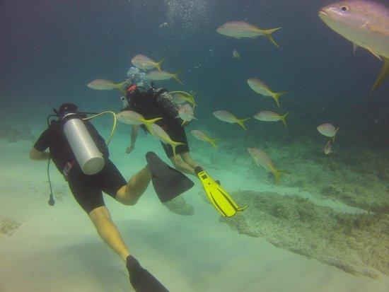 Happy Dive Center: Event the fish are friendly