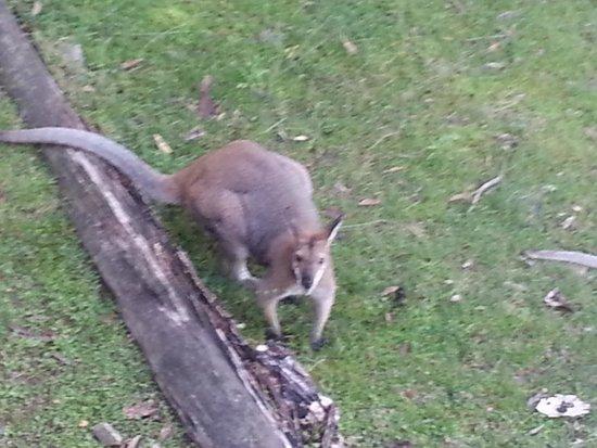 Eaglereach Wilderness Resort: wild life very friendly