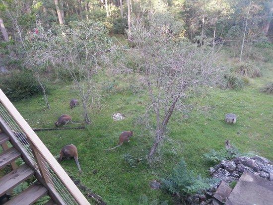 Eaglereach Wilderness Resort: out back cabin
