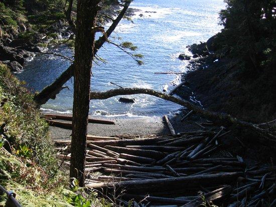 Wild Pacific Trail: Browns Beach on Trail
