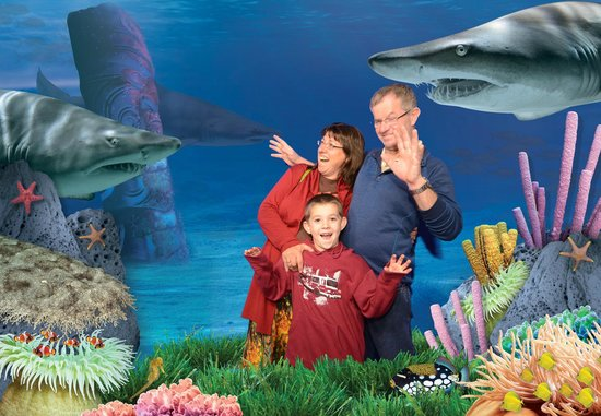 Kelly Tarlton's Sea Life Aquarium : Underwater