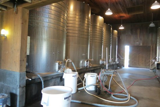Frog's Leap Winery : Where magic happens
