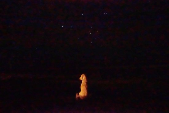 Hotel Playa Negra: Stargazing with our sweet perro guardian friend