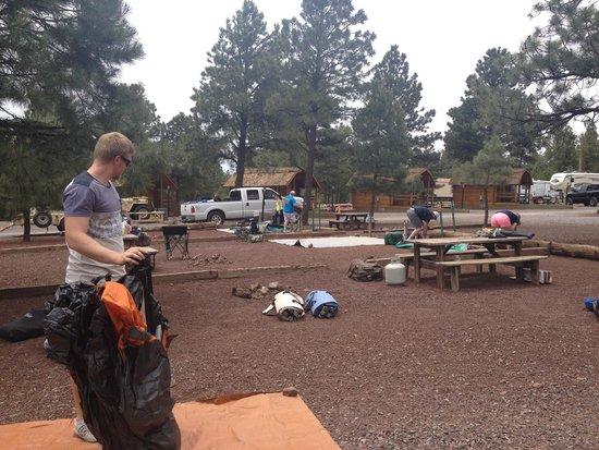Williams / Circle Pines KOA Campground : Tent site