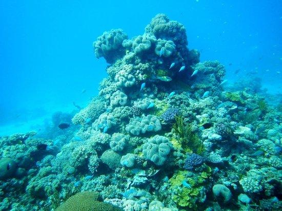 Deep Sea Divers Den Day Trips: Taka Range