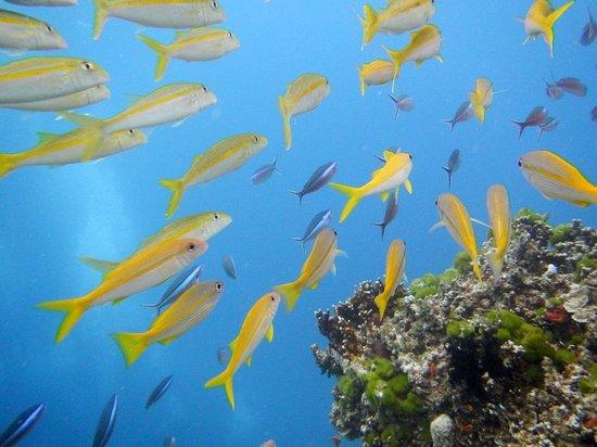 Deep Sea Divers Den Day Trips: Steve's Bommie