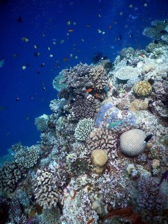 Deep Sea Divers Den Day Trips : Steve's Bommie