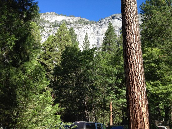 Yosemite Valley Lodge : From my back door.