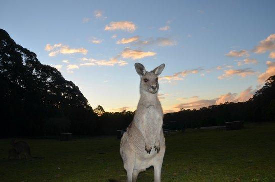 Jenolan Caves House: Kangaroo & Sunset