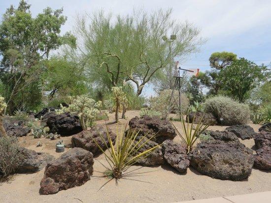 Ethel M Chocolates Factory and Cactus Garden: A view of the cactus garden