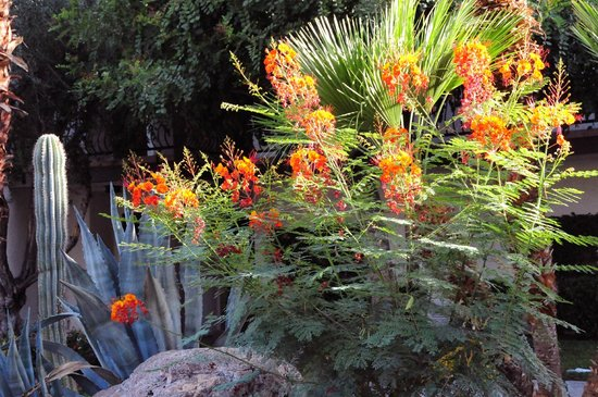 Omni Rancho Las Palmas Resort & Spa: pretty landscaping