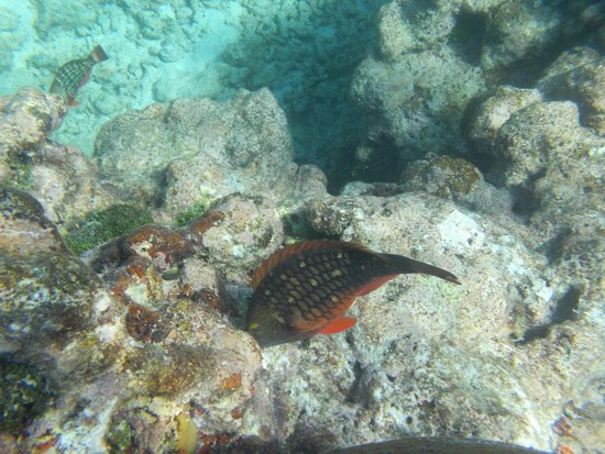Spirit Snorkeling: Just one of many, many beauties.