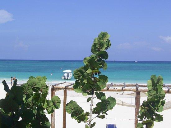 Catalonia Playa Maroma : The beach. Beautiful!