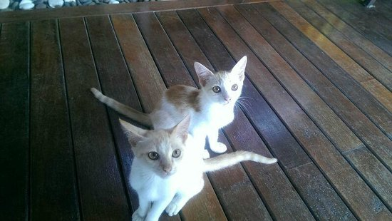 Phu Pi Maan Resort & Spa: Gorgeous kittens at the restaurant