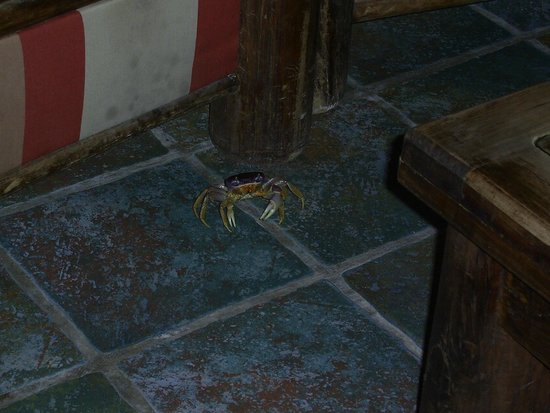 Catalonia Playa Maroma : This little crab tried to check-in one night by the Lobby Bar.