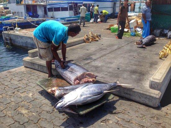 Male Fish Market: Yellow-fin tuna in the process of disembowelment