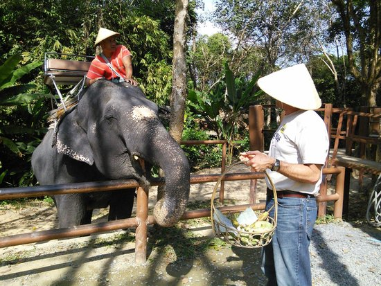 Siam Safari: feeding the elephant