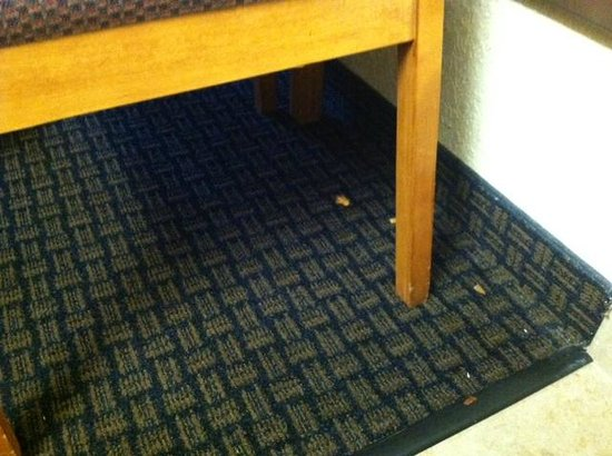 Motel 6 San Diego Mission Valley East: Dried up spaghetti on carpet