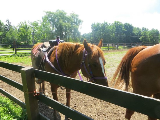 Pinegrove Family Dude Ranch: horses