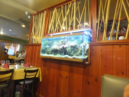 Orchids Authentic Thai Food: Pretty live fish tank and colorful corals as decor