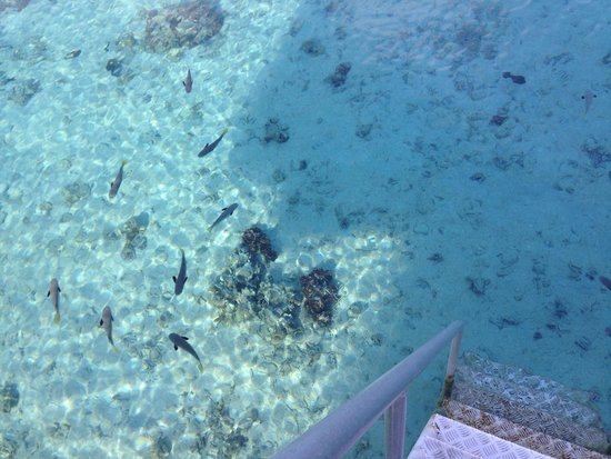Sofitel Moorea Ia Ora Beach Resort: Overwater sea...��������