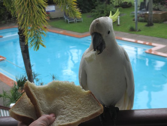 BEST WESTERN Mango House Resort: 1 bdrm apartment.  p.s. don't feed the birds.