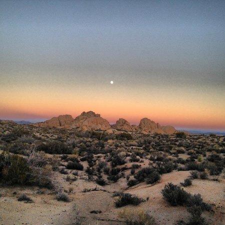 Joshua Tree National Park: Beautiful Moonrise