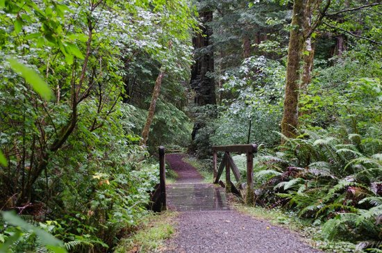 Redwood National Park: Bridge on the Leiffler Trail
