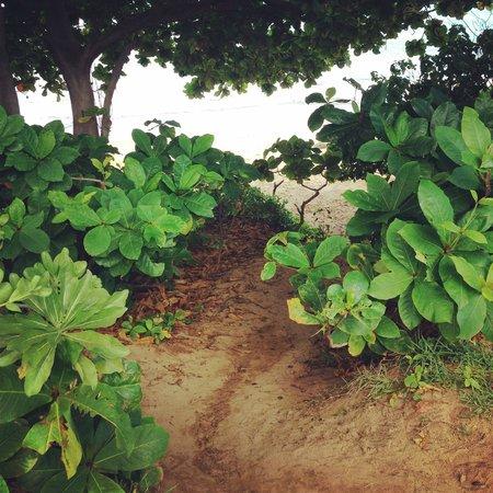 Maui Beach Yoga: path down to the beach