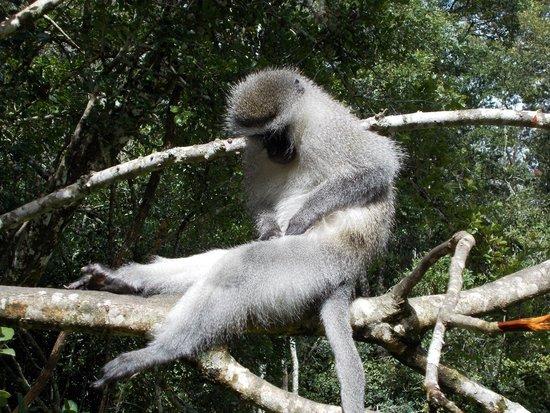 Monkeyland Primate Sanctuary : Cute