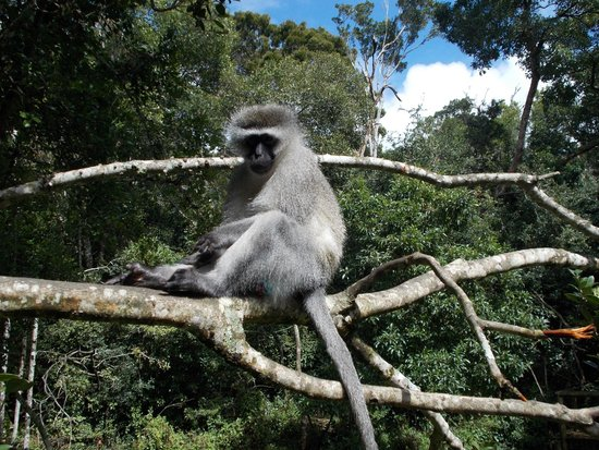 Monkeyland Primate Sanctuary : **