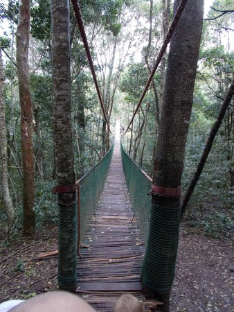 "Monkeyland Primate Sanctuary: The ""scary"" bridge, very very cool"