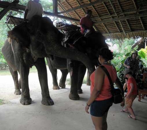 Nosey Parker's Elephant Camp - Private Day Tours : Feeding cucumbers to the elephants