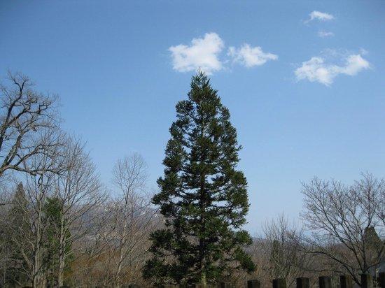 Togakushi Shrine Okusha: 奥社から見る景色