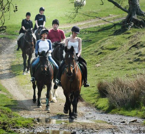 Springhill Farm Riding Stables