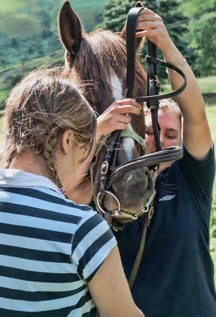Springhill Farm Riding Stables: Riding holidays
