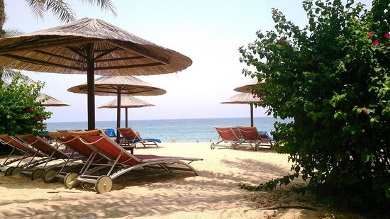 Miramar Al Aqah Beach Resort: Beach Area