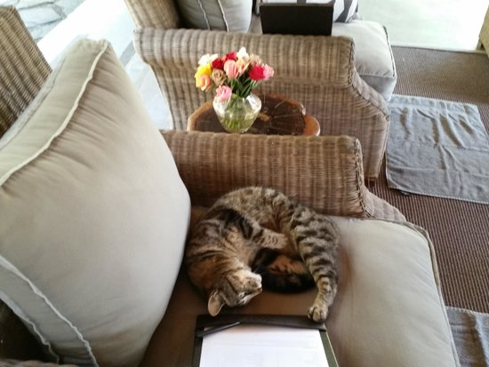 Summerfields Rose Retreat & Spa : kitty at the Spa