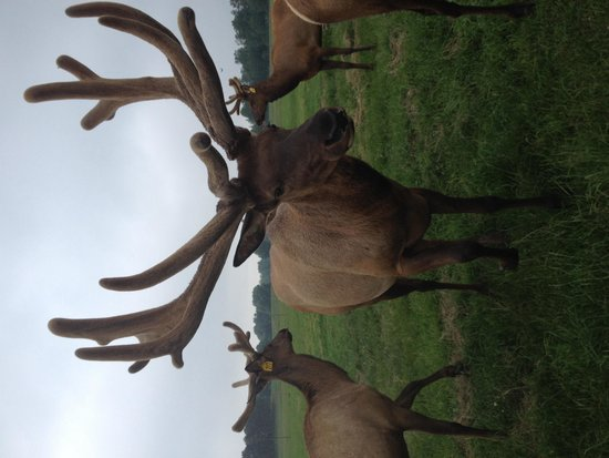 Amber Elk Ranch